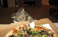 """FOODporn.pl """"Cats Stealing Pizza Compilation"""" 