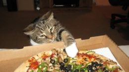 """""""Cats Stealing Pizza Compilation"""" 