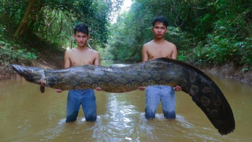 Cooking Biggest Frecklefin Eel Soup Near River In Forest