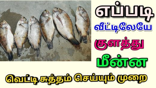 How To Clean Fish In tamil|Fish Cleaning Proper Method In Tamil |How to Clean Fish In Home Prepared