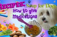 FOODporn.pl Soup for dogs, How to give medications, 5 recipes, Coton de tulear I Lorentix