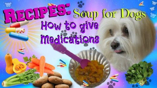 Soup for dogs, How to give medications, 5 recipes, Coton de tulear I Lorentix