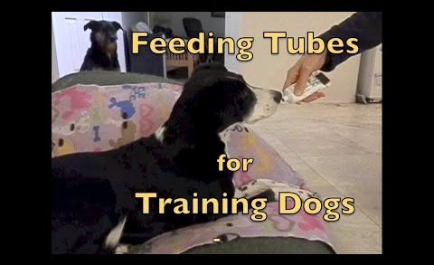 Treat Delivery: Food Tubes for Training Dogs