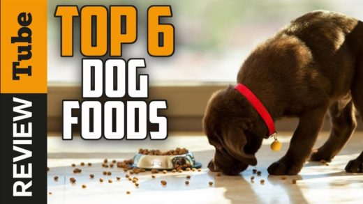 ✅Dog Food: Best Dog Food 2019 (Buying Guide)