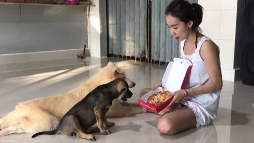 BIG  SURPRISE FOR MY LOVELY DOG, FEEDING PIZZA FOR DOG
