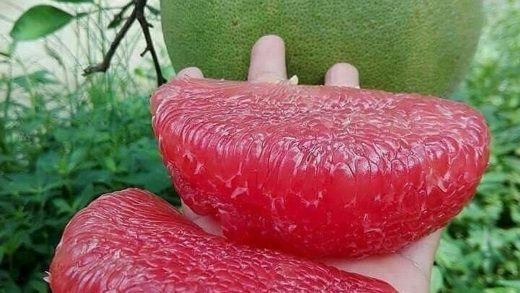 Can you guess what fruit this is!?!? - :  . . .                              ...