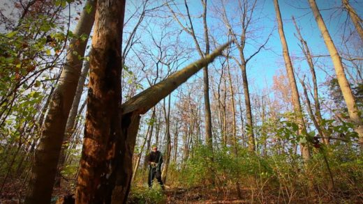 NEW Bushcraft Camp (Ep.1) | Tree Felling & Campfire Cooking