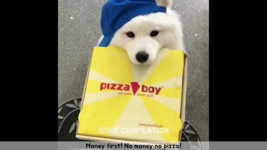 No money no pizza ! CUTE DOGS Compilation