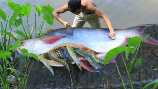 Unbelievable Macrognathus Aral Fish In Big Fish Stomach and Cooking Soup Recipe​ in forest