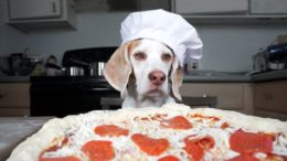 FOODporn.pl Dog Makes Pizza: Cute Dog Maymo
