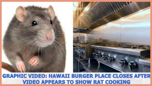 Fox News | GRAPHIC VIDEO: Hawaii burger place closes after video appears to show rat cooking