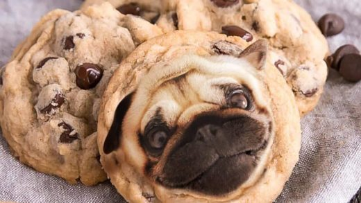 YES OR NO??? Dog cookies  by    These dog-shaped cookirs are so realistic.                       ...