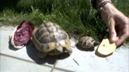 28.04.2012 My 2 turtles Rudy & Tarty with my hamster Brus!!!