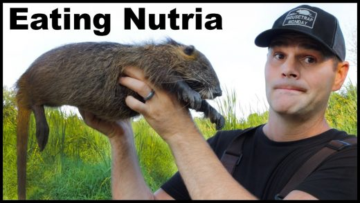 """Amazing """"Swamp Rat"""" Pulled Pork Recipe. How to Cook and Eat Nutria. Mousetrap Monday"""
