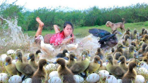 Cooking in forest- women and dog meet duck, baby duck and egg- eating delicious HD