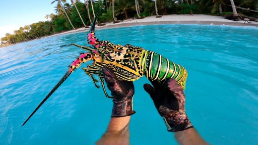 Giant Rainbow Lobster!! Catch and Cook - Solo Survival Life