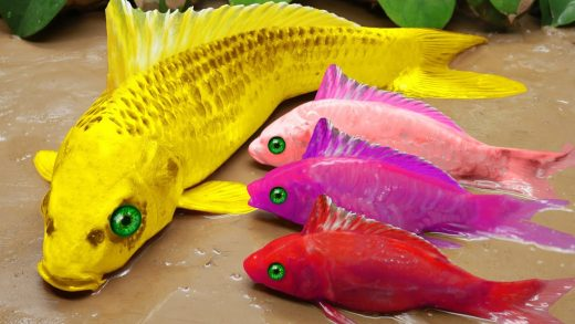 Stop Motion Cooking ASMR - Colorful Koi Fish Catching Pink Catfish, Eel-fish Fish Experiment Videos