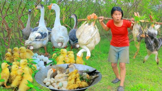 Women Help baby Goose in forest  - Cooking soup  Goose  egg for dog Eating delicious HD